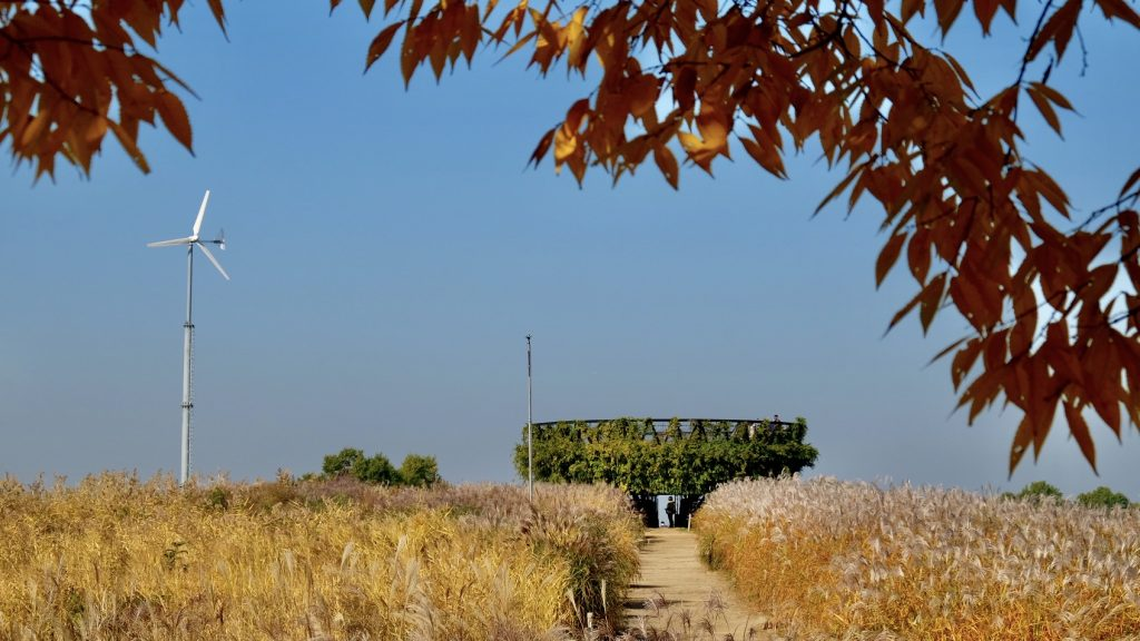 Haneul Park Fall