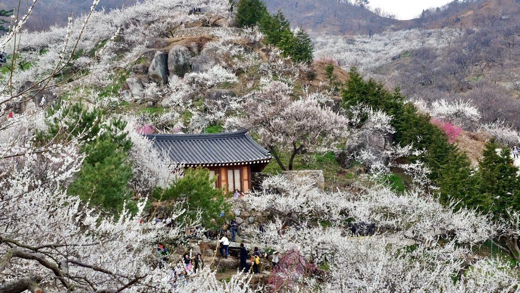 Gwangyang Maehwa Festival Hanok House