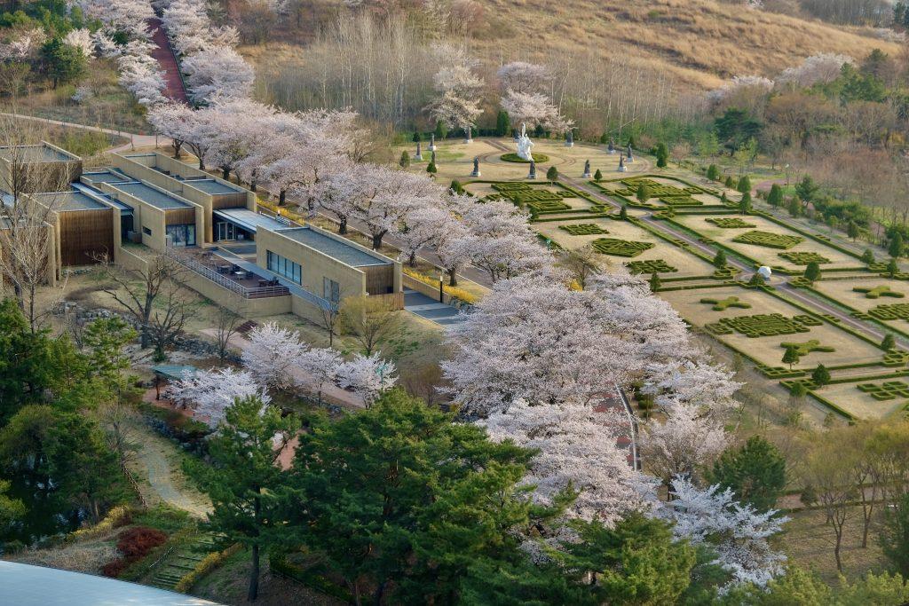 Gyeongju Cherry Blossom Festival
