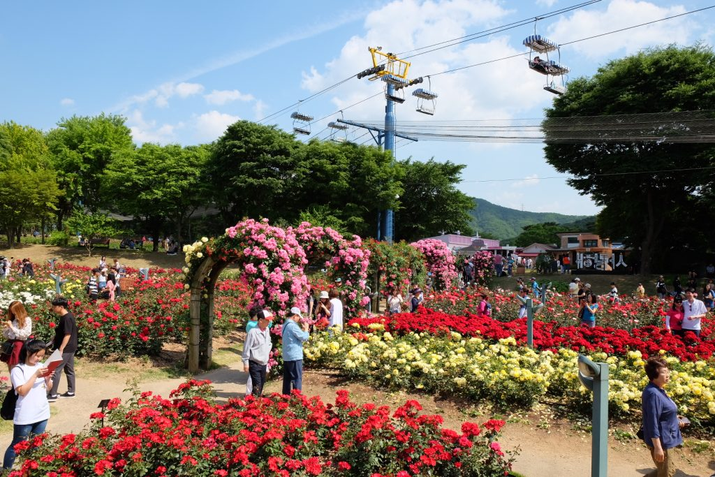 Seoul Grand Park Rose Festival view to Lift