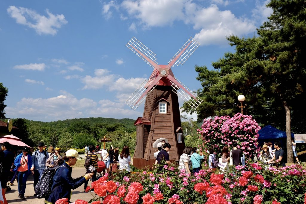 Seoul Grand Park Rose Garden Dutch Windmill