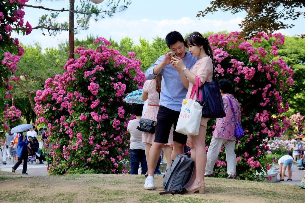 Seoul Grand Park Rose Garden