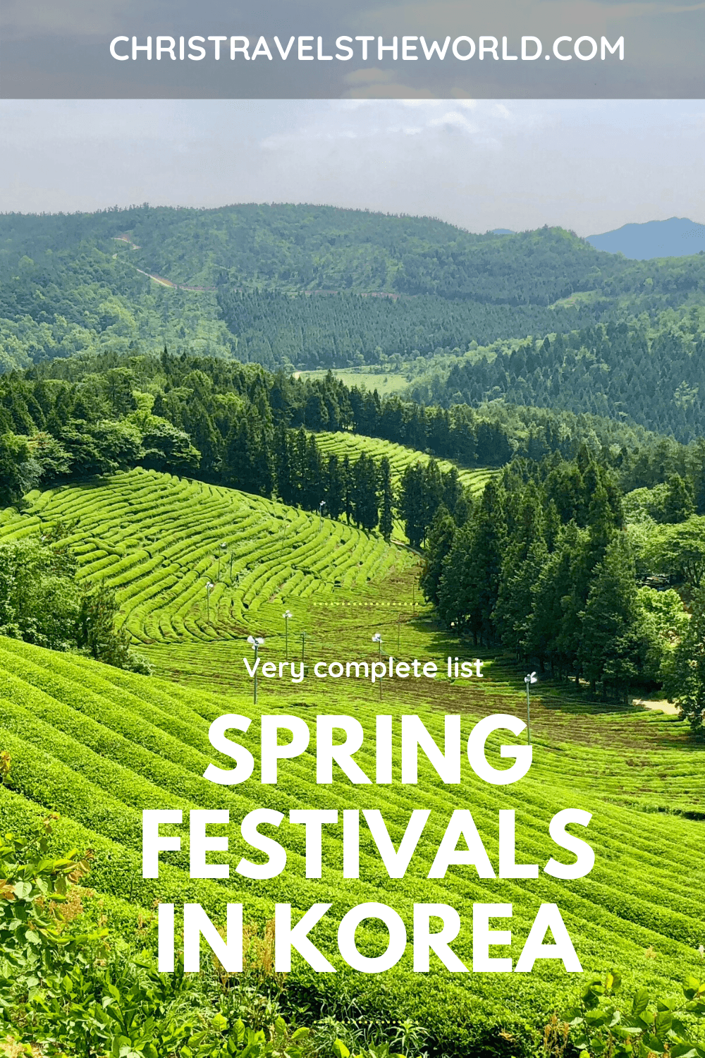 One of best things about South Korea - festivals! Spring abounds with various festivals, in Seoul and all over Korea. A very complete guide to spring festivals in #southkorea #festivals #spring #koreatravel