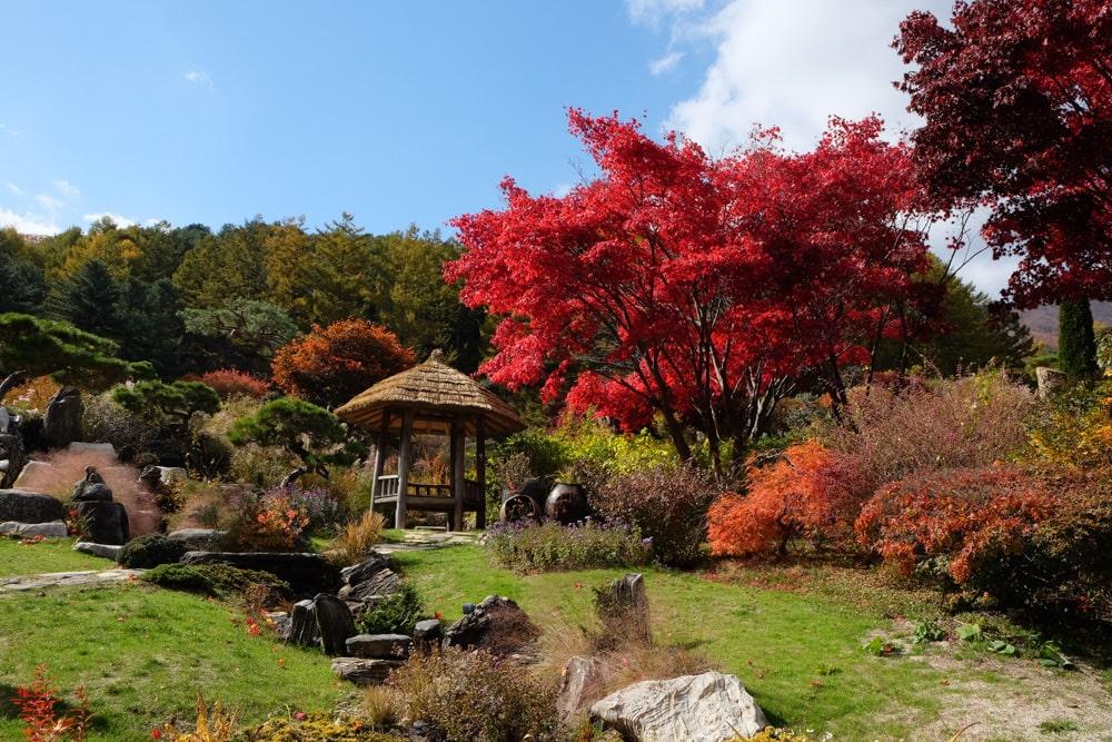 Autumn in Garden of Morning Calm