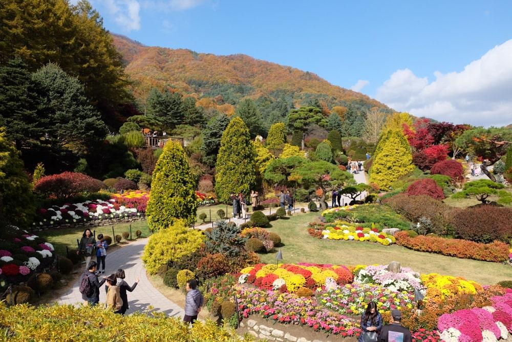 Fall in the Garden of Morning Calm